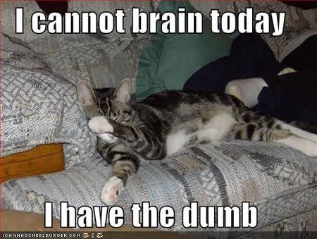 I cannot brain today, I have the dumb. #lolcats