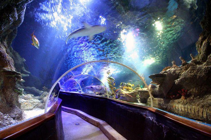 Linnanmäen huvipuiston yhteydessä sijaitseva merimaailma on osa kansainvälistä Sea Life -verkostoa, joka on maailman suurin yleisöakvaarioketju.