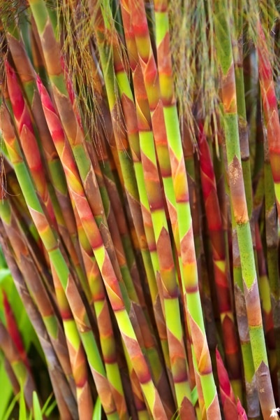 """Previous pinner: """"Restio: A reed-like South African plant""""  Me: I honestly thought it was fabric when I first glanced at it!"""