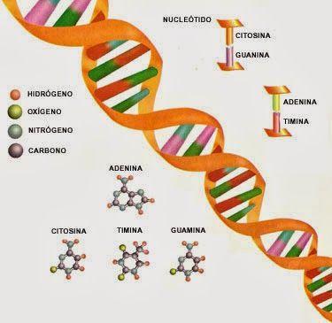Los científicos Rusos demuestran que el ADN puede ser reprogramado por palabras y frecuencias determinadas. - Los Misterios de la Tierra