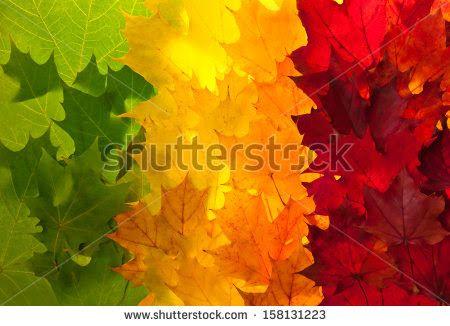 autumn gradient - Google Search