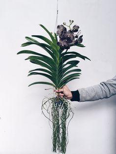 Flo Atelier dá dicas para manter a flor epífita sempre bela