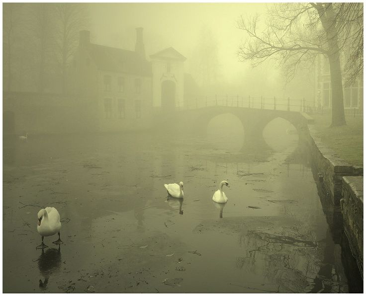 Brugges, Belgium: Photos, Delicate Mists, Fog Photography, Winter Mornings, Johni Hemelsoen, Bruges Photo, Foggy Winter, Brugge Die, Beautiful Brugge