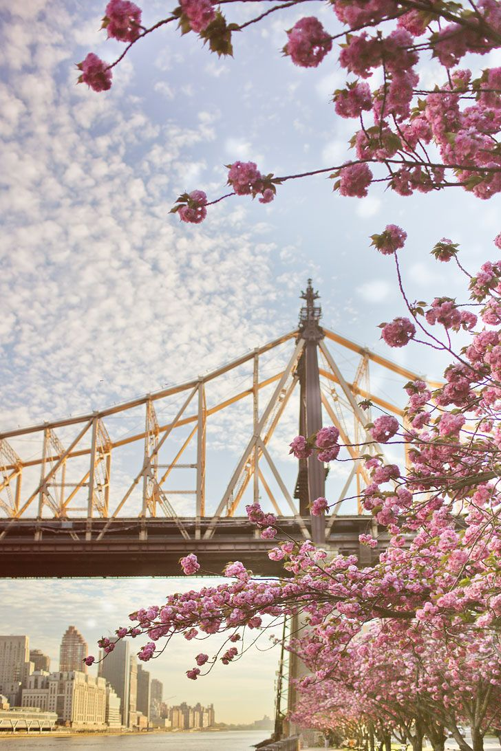 Best Places To See Cherry Blossoms In Nyc Cherry Blossom Pretty Flowers Pictures Nyc Tourist Attractions