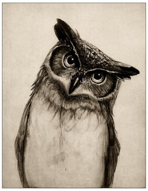 Owl drawing..... I'm going to draw this