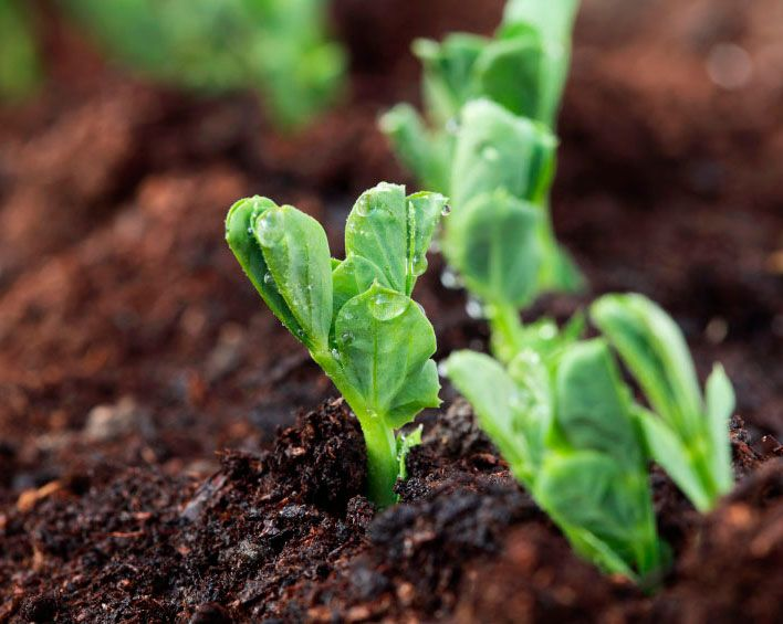 TOP RECOMMENDED WINTER GARDENING TIPS TO FOLLOW Winter Gardening Tips.