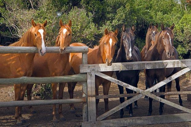 {Video of the week} Horseback riding | Grootbos #HorseRiding #Horses #Travel http://www.grootbos.com/en/blog/travel/video-of-the-week-horseback-riding