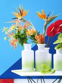 Exotische bloemen Gloriosa Strelitzia Anthurium Mooiwatbloemendoen.nl
