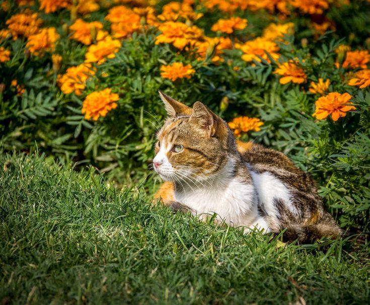 Katzenkot Im Garten Recht Fur Ultimativen Luxus Und Komfort Von Was Tun Gegen Katzenkot Im Garten Katzen Artgerecht Vertreiben Durchgehend Animals Cats Garden