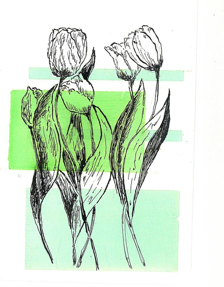 tulips. watercolor and ink.