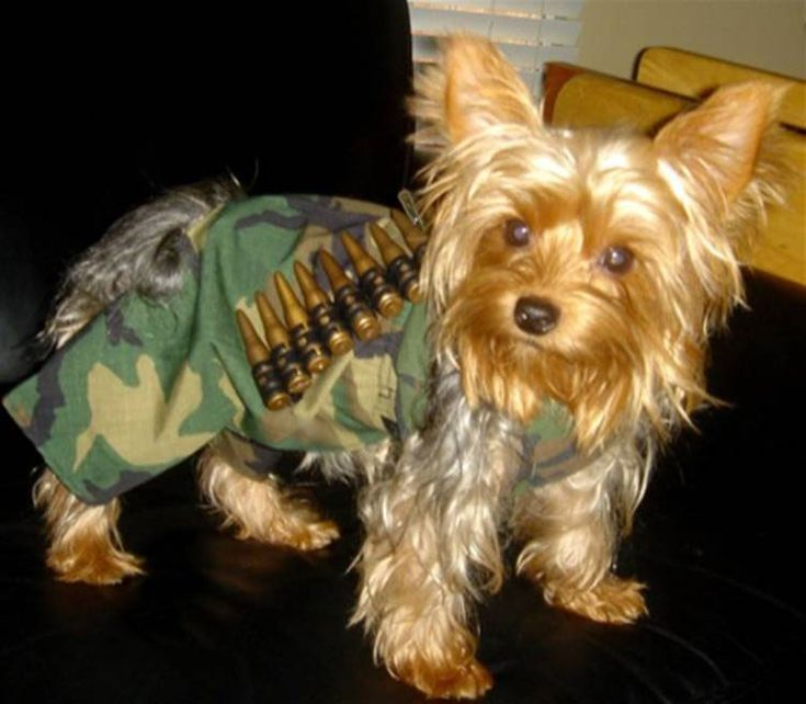 Must see Soldier Army Adorable Dog - 27e6d0b40717ce5148b4ee56e2dc47a6--funny-dog-costumes-dogs-in-costumes  2018_514433  .jpg