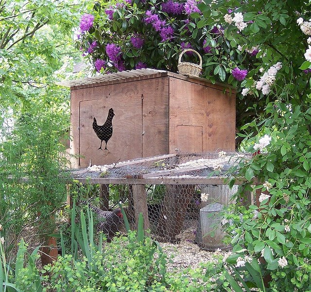 Cute chicken coop in the garden.