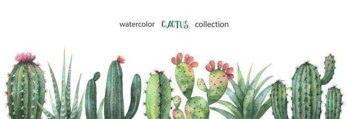 Watercolor Vector Banner Of Cacti And Succulent Plants Isolated On