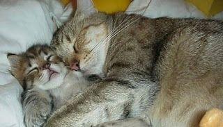 mimpi anak kucing yang banyak,mati,maksud,kucing putih,makna,menurut islam,mimpi melihat anak kucing,melahirkan anak kucing,