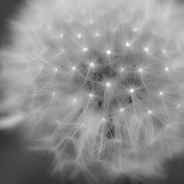 Dandelions--doesn't this encapsulate that bit of magic?