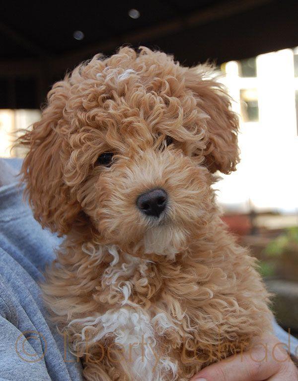 This dog is cuter than a teddy bear.