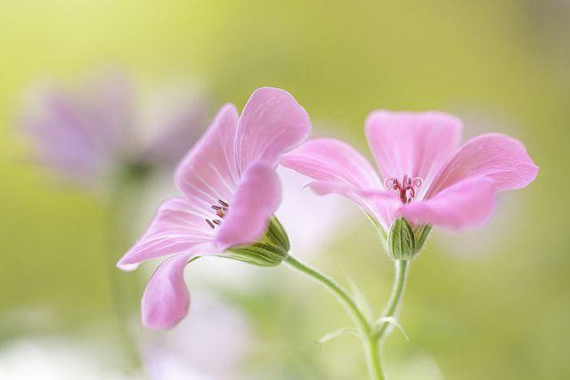 livrer des fleurs 53 #fleurs #bouquet