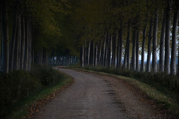 pioppeto autunno edition - a wood of poplars *autumn edition*
