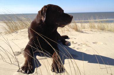 Hond-liggen-strand.jpg