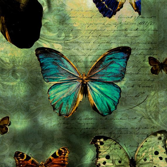 Paris Photography Butterfly Paris Butterflies Fine by 1029Gallery