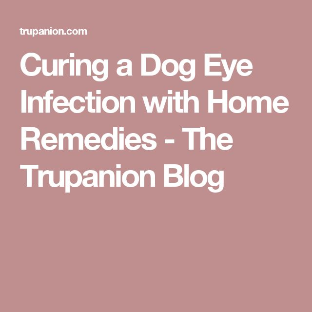 Curing a Dog Eye Infection with Home Remedies - The Trupanion Blog