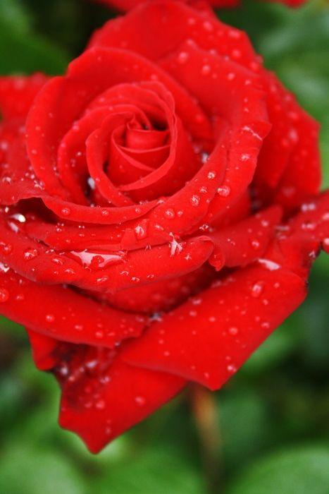 Happy Valentine*s  day ..........