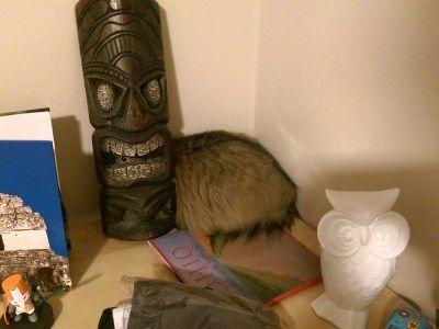 나름 숨어본 고양이 #현실도피 #고양이 #유머 #짤