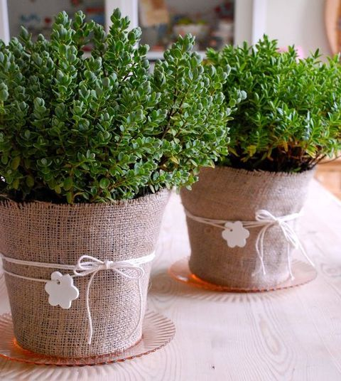 61 Cutest Potted Plants Ideas For Your Wedding | HappyWedd.com