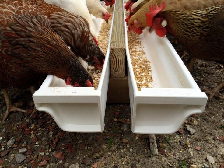 Fermented Feed Trough From Vinyl Gutters Chickens