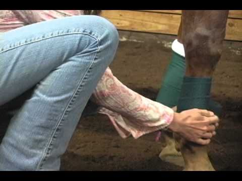 How to Put Polo Wraps and Standing Wraps on Horses | @EquiSearch.com | Certified Horsemanship Association