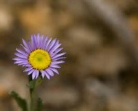 Image result for Types of Wildflowers