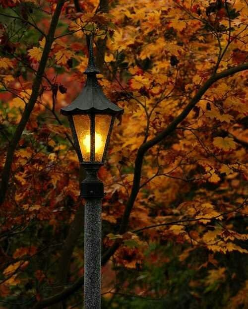 Streetlamp and yellow leaves