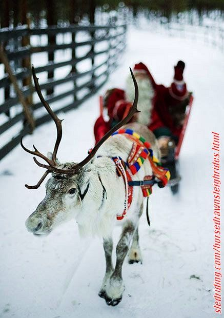 Horse drawn sleigh rides via http://sledriding.com/horsedrawnsleighrides.html   #Sleds #Sledding #ExperienceWinter #HorseDrawnSleigh   #HorseDrawnSleighRide