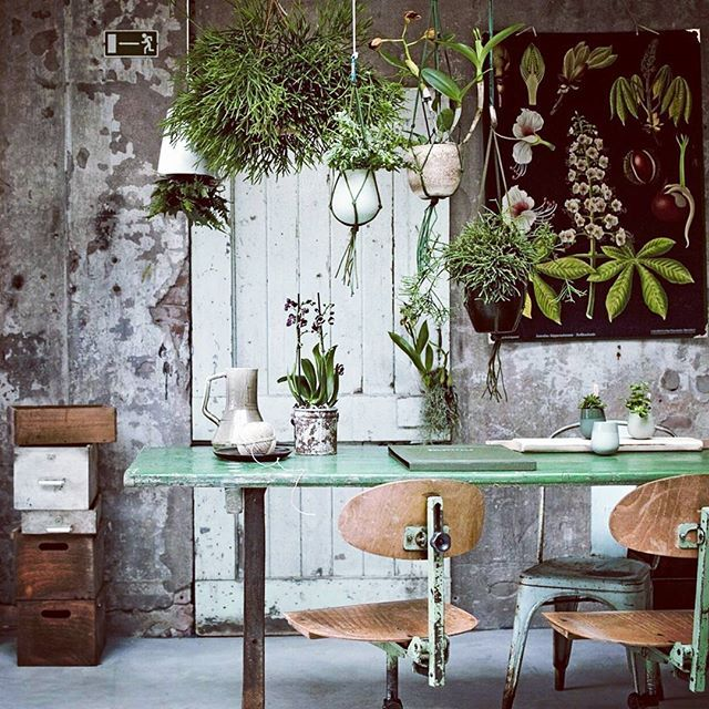 121 best urban jungle images on pinterest plants indoor for Decoration urban jungle