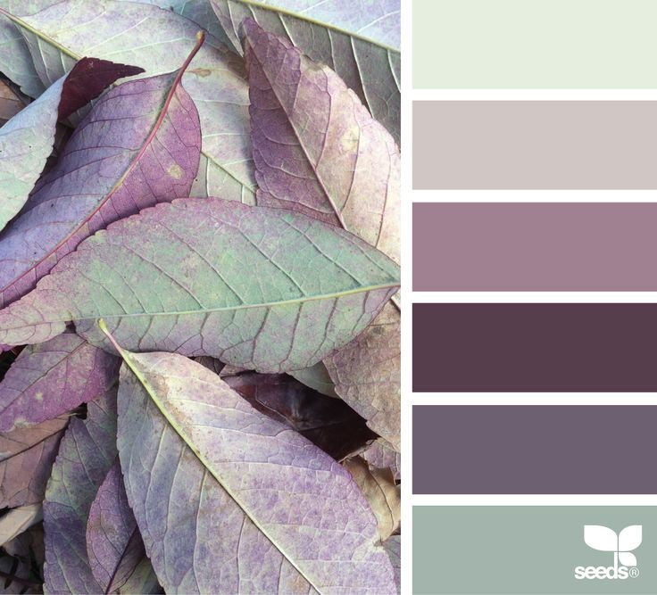 { color leaves } image via: @designseeds
