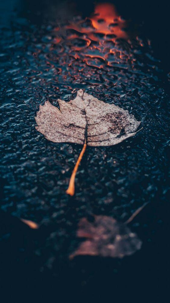 اجمل خلفيات ايفون Wallpaper Iphone 8 Plus Tecnologis Rain Pictures Rain Wallpapers Rain Photography