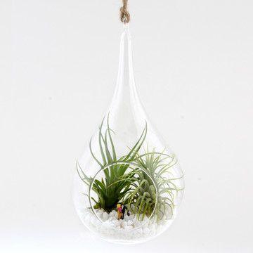 Die besten 25+ Twig terrariums Ideen auf Pinterest Diy terrarium - indoor garten wohlfuhloase wohnung begrunen
