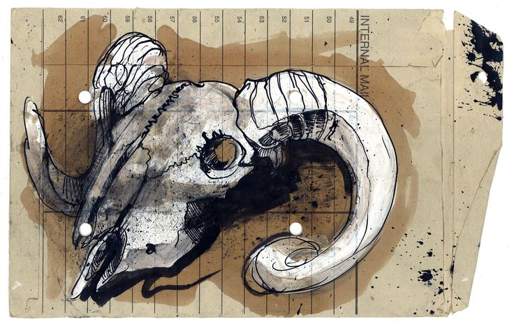 Ram Skull study- working with students at college. www.duncancameron.org