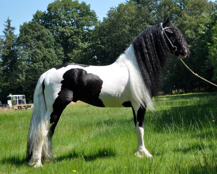 Disegni di cavalli 74 best cavalli images on pinterest for Immagini cavalli stilizzati
