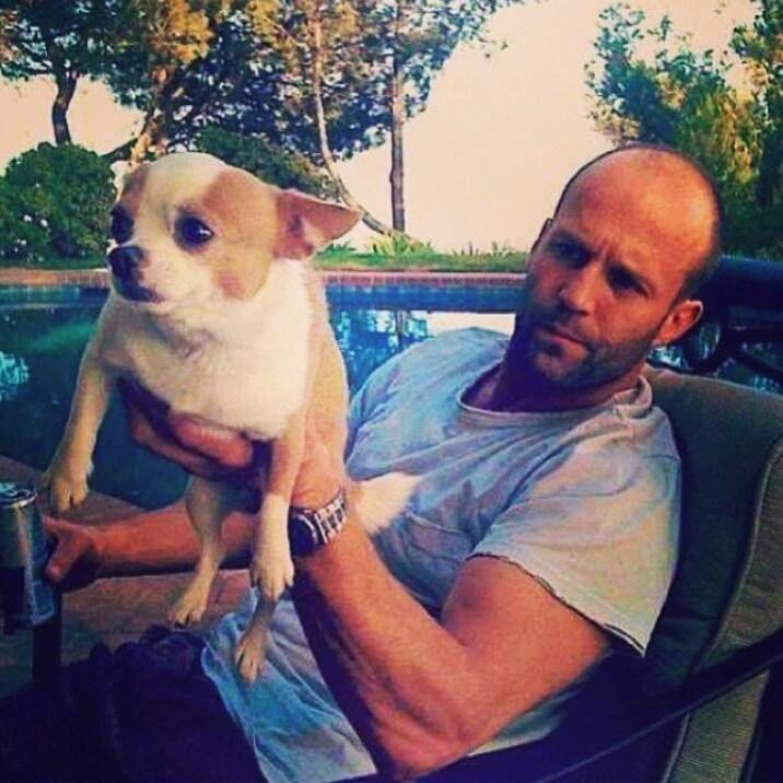 Photo of Jason Statham & his  Dog