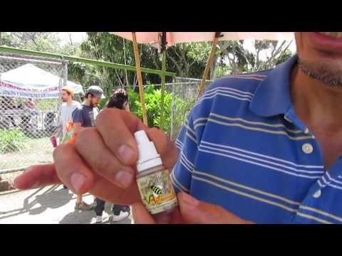 Apicultura Meliponas medicinal en Costa Rica salvando abejas, A Costa Rica Nature video clip - YouTube