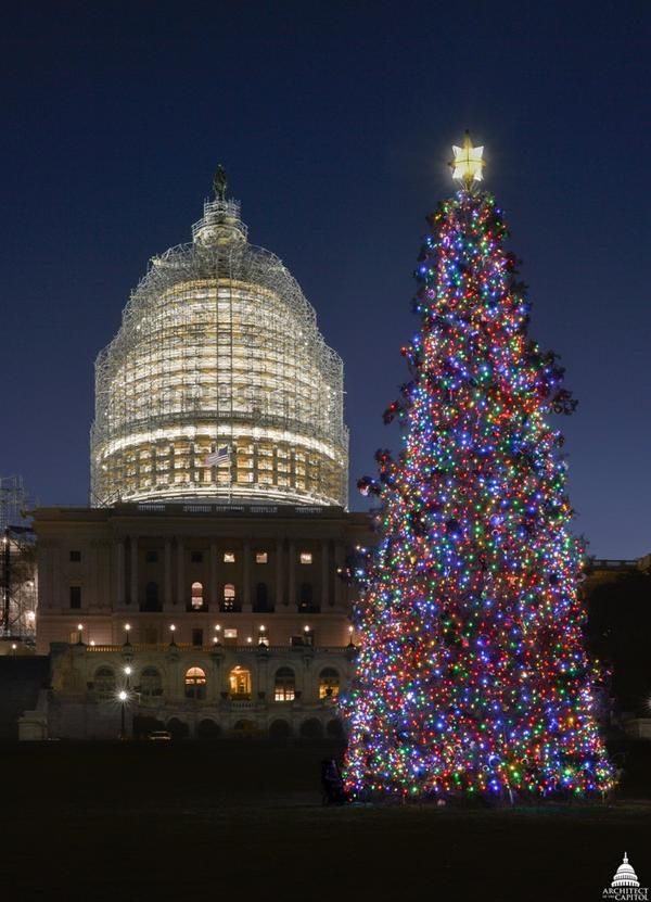 The 2014 #Capitol #Christmas #Tree has been lit!