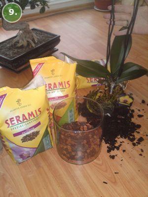 Garten Pflanzen Ungiftigezimmerpflanzen Zierpflanzen Zimmerpflanze Zimmerpflanzeweniglicht Zimmerpflanzen Zimmerpflanzenanspruche Plants Herbs Flowers