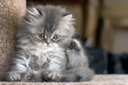 -Cats- - cats photo