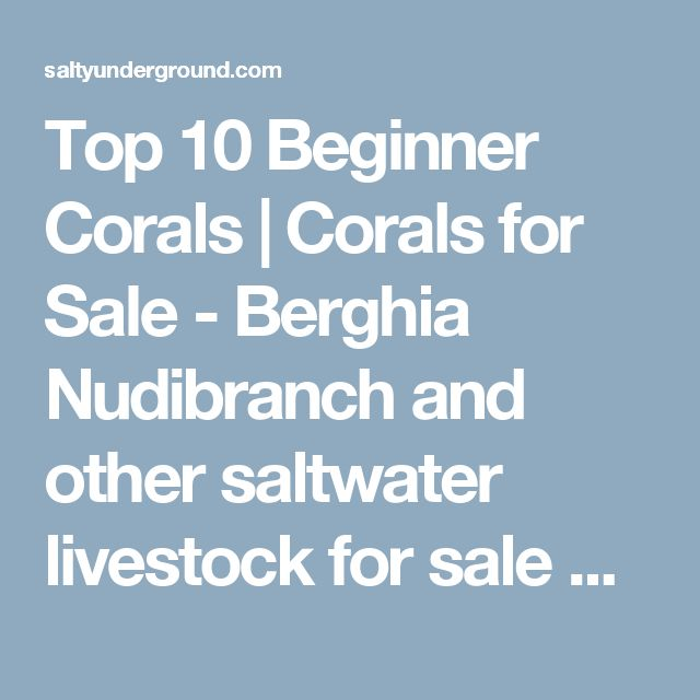 Top 10 Beginner Corals | Corals for Sale - Berghia Nudibranch and other saltwater livestock for sale online