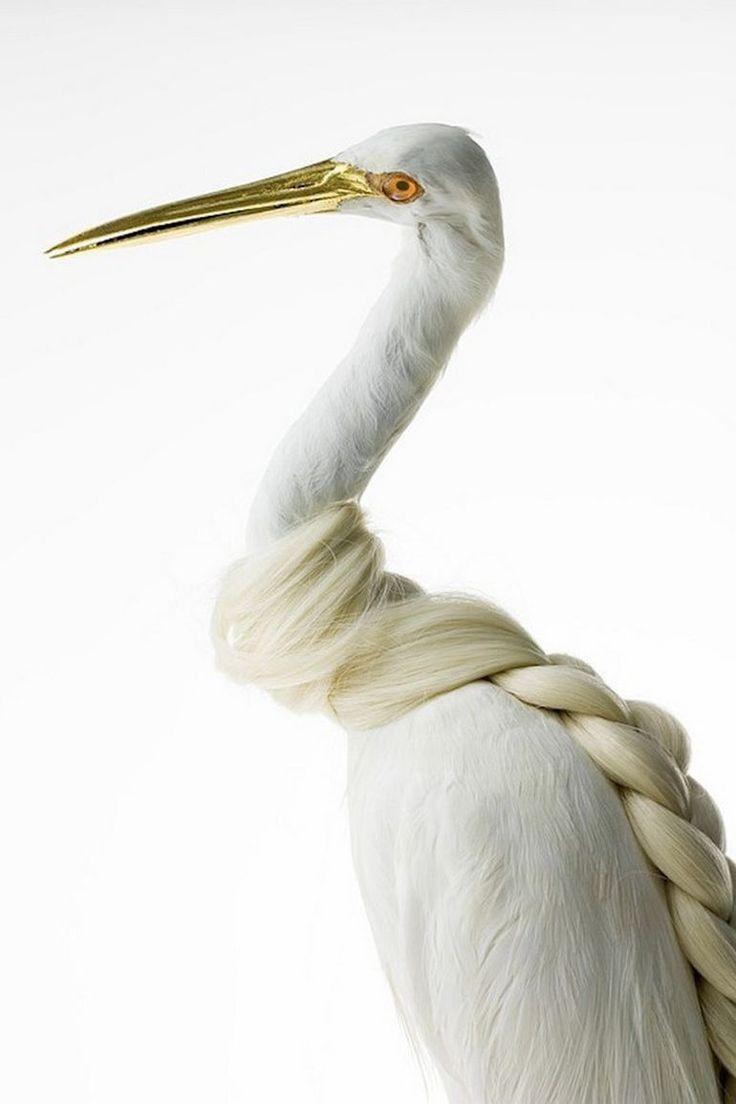 Burung cantik 12 (Karleyfeaver.com)