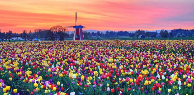 Te lo decimos con flores: 35 increíbles paisajes llenos de color