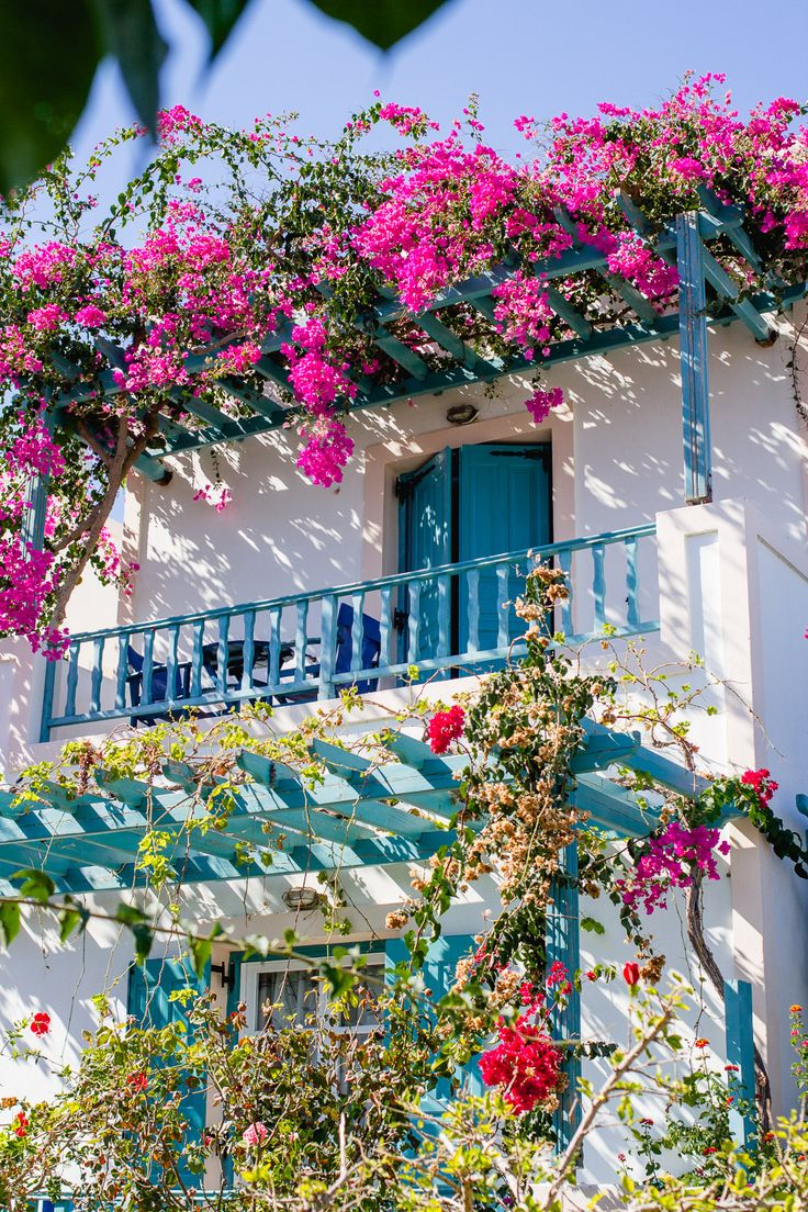 Villa in Perissa Santorini with a blue balcony with pink bougainvillea trailing