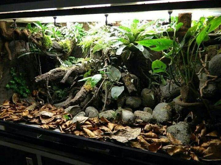26 Best Images About Salamander Terrarium And Vivarium