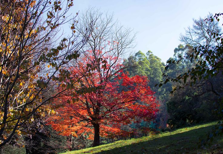 Pirianda gardens Olinda VIC - One of the few places in Victoria where you can enjoy the feel of European autumn.